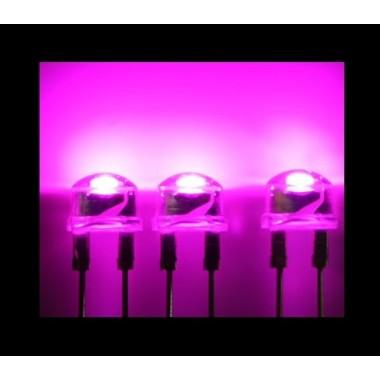 SH-PINK LED